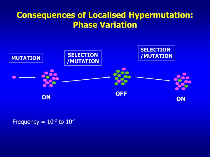 Consequences of Localised Hypermutation: