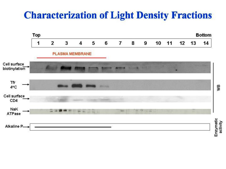 Characterization of Light Density Fractions