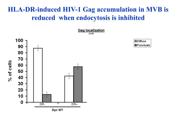 HLA-DR-induced HIV-1 Gag accumulation in MVB is reduced  when endocytosis is inhibited