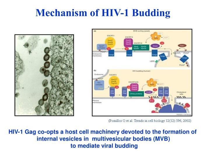 Mechanism of HIV-1 Budding