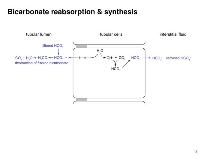 Bicarbonate reabsorption synthesis