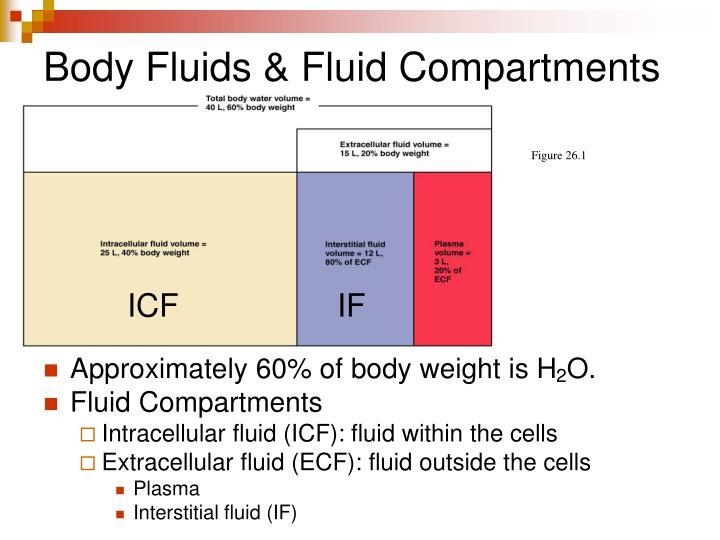 Body fluids fluid compartments