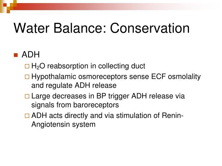 Water Balance: Conservation