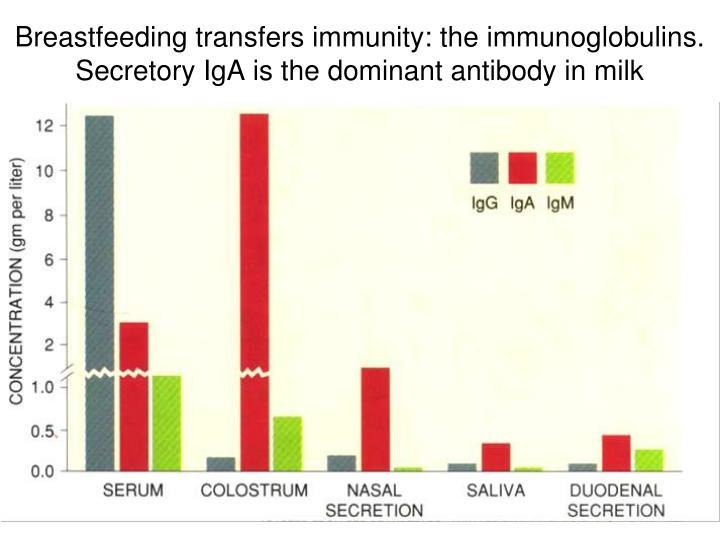 Breastfeeding transfers immunity: the immunoglobulins. Secretory IgA is the dominant antibody in milk