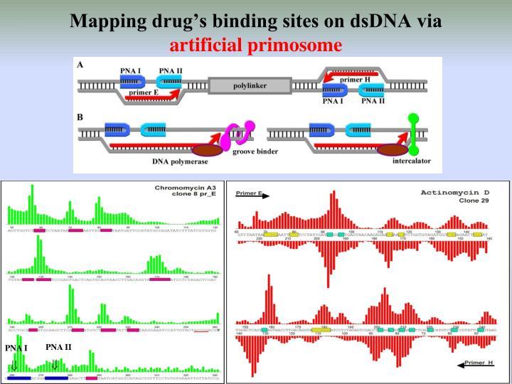 Mapping drug's binding sites on dsDNA via