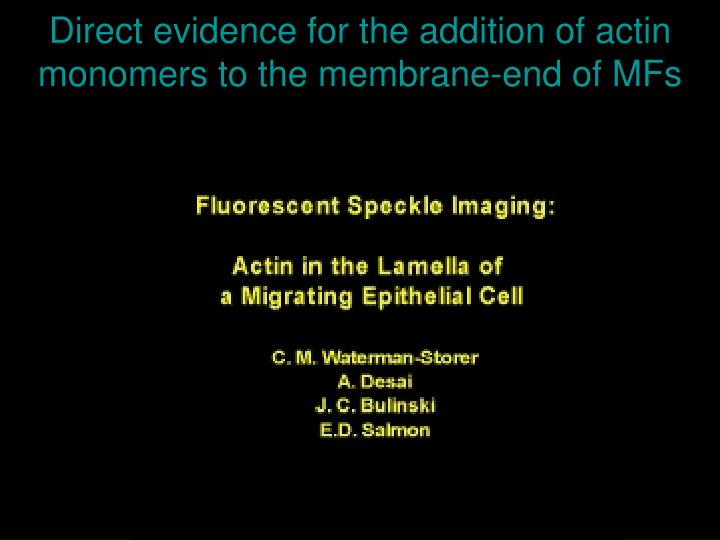 Direct evidence for the addition of actin monomers to the membrane-end of MFs
