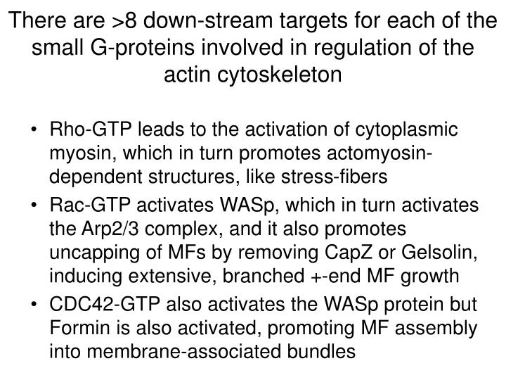 There are >8 down-stream targets for each of the small G-proteins involved in regulation of the actin cytoskeleton