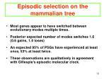 episodic selection on the mammalian tree