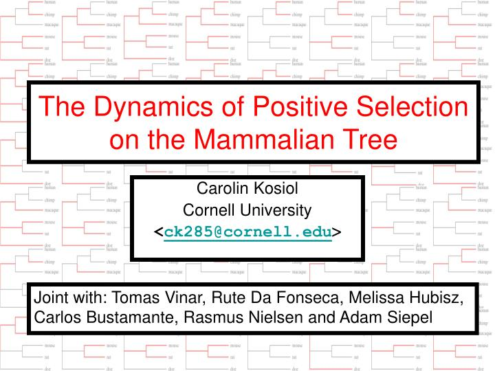 the dynamics of positive selection on the mammalian tree n.