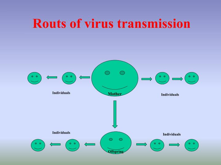 Routs of virus transmission