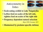 antisymmetry in fishes