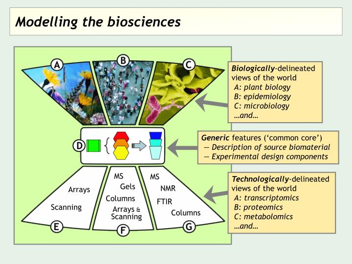 Modelling the biosciences