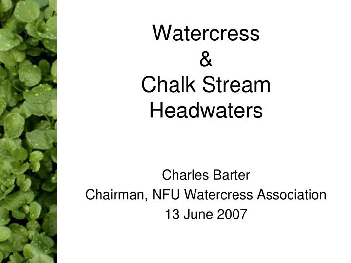 watercress chalk stream headwaters