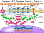 complex her receptor signaling pathway