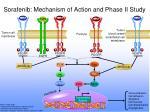sorafenib mechanism of action and phase ii study