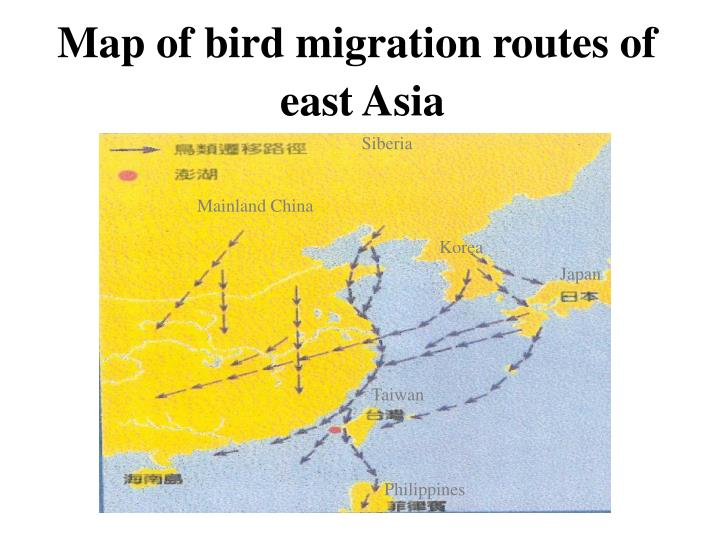 Map of bird migration routes of