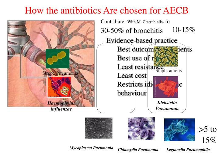 How the antibiotics Are chosen for AECB