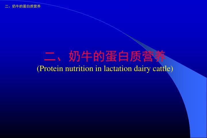 二、奶牛的蛋白质营养