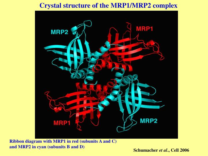 Crystal structure of the MRP