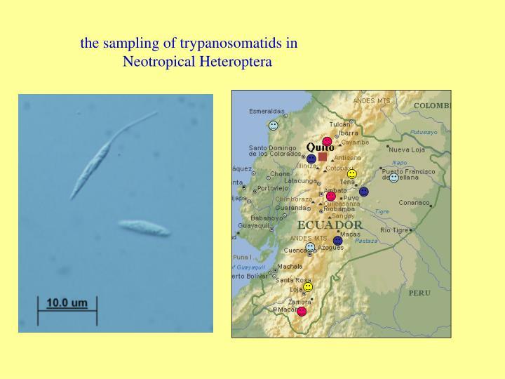 The sampling of trypanosomatids in