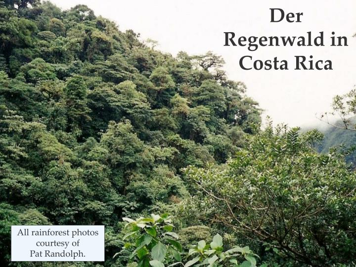 Der  Regenwald in Costa Rica