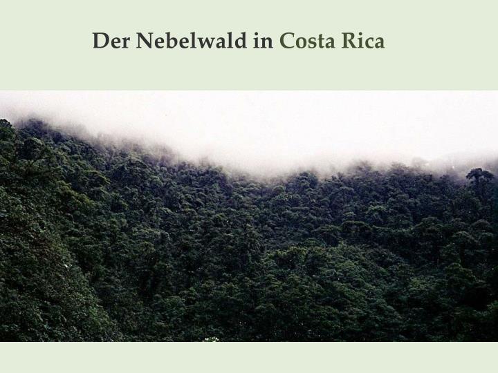 Der Nebelwald in