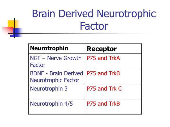 Brain Derived Neurotrophic Factor