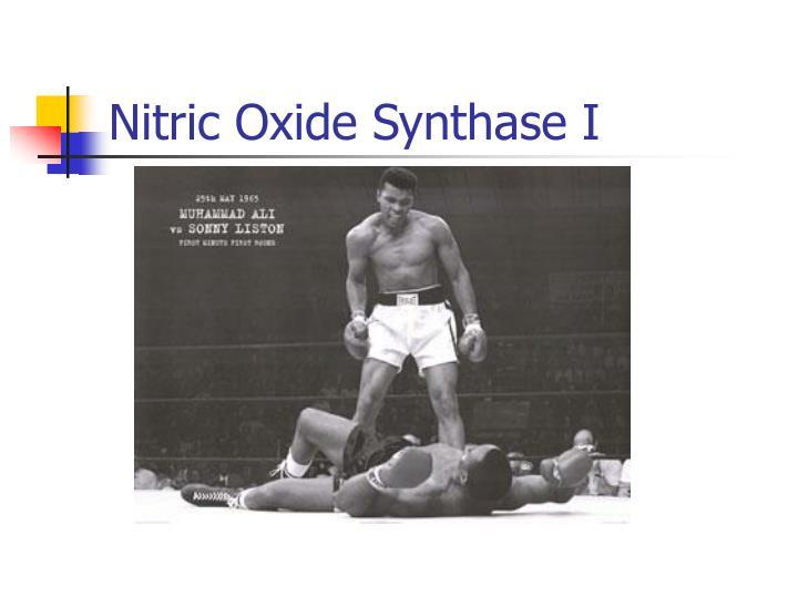 Nitric oxide synthase i1