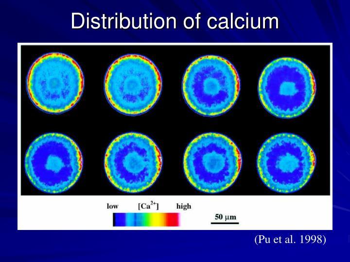Distribution of calcium