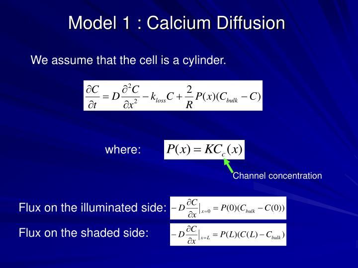 Model 1 : Calcium Diffusion
