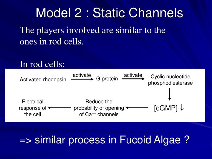 Model 2 : Static Channels