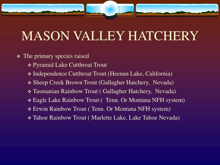 Mason valley hatchery1