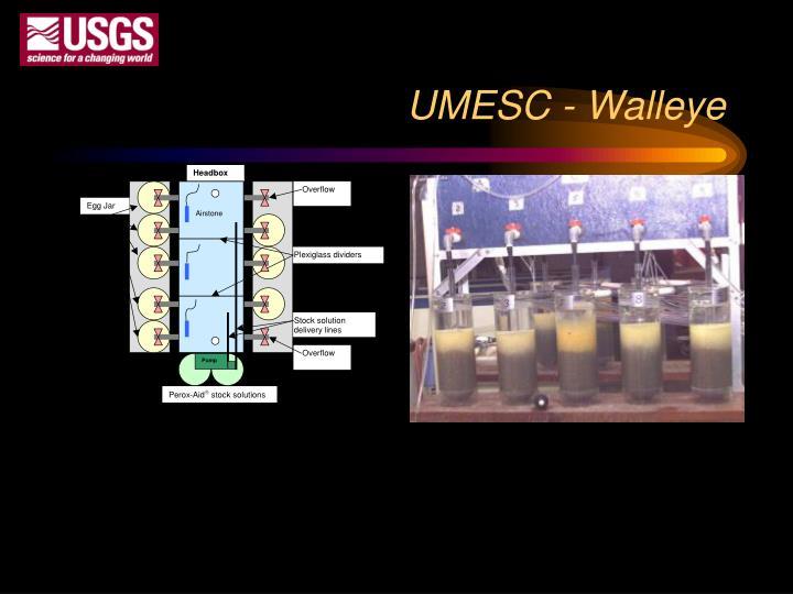 UMESC - Walleye