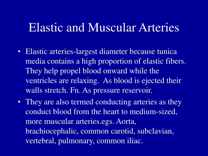 Elastic and Muscular Arteries