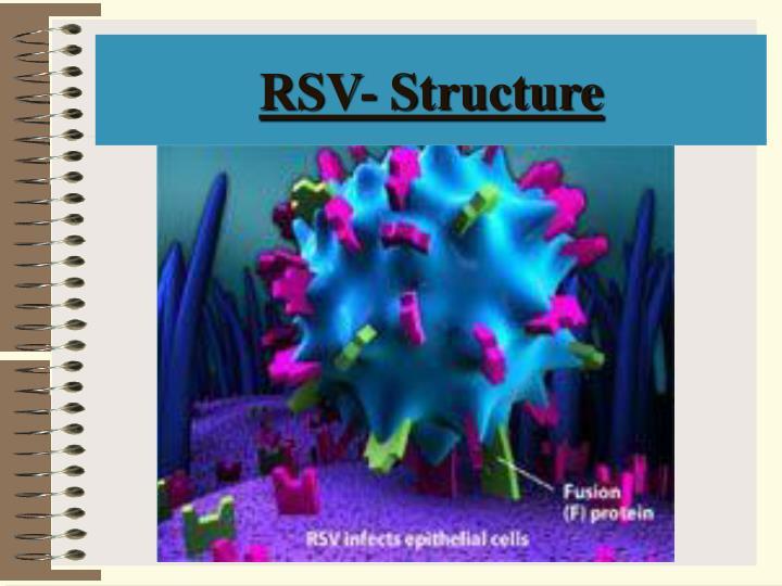RSV- Structure