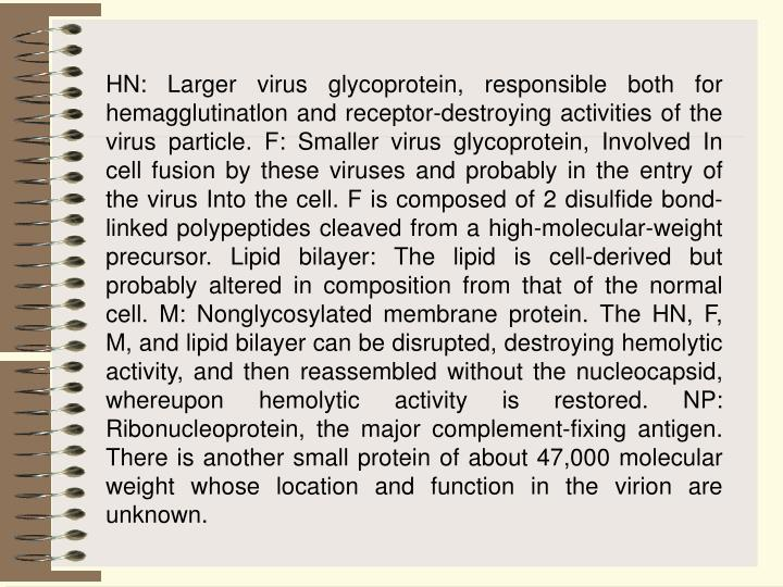 HN: Larger virus glycoprotein, responsible both for hemagglutinatlon and receptor-destroying activities of the virus particle. F: Smaller virus glycoprotein, Involved In cell fusion by these viruses and probably in the entry of the virus Into the cell. F is composed of 2 disulfide bond-linked polypeptides cleaved from a high-molecular-weight precursor. Lipid bilayer: The lipid is cell-derived but probably altered in composition from that of the normal cell. M: Nonglycosylated membrane protein. The HN, F, M, and lipid bilayer can be disrupted, destroying hemolytic activity, and then reassembled without the nucleocapsid, whereupon hemolytic activity is restored. NP: Ribonucleoprotein, the major complement-fixing antigen. There is another small protein of about 47,000 molecular weight whose location and function in the virion are unknown.