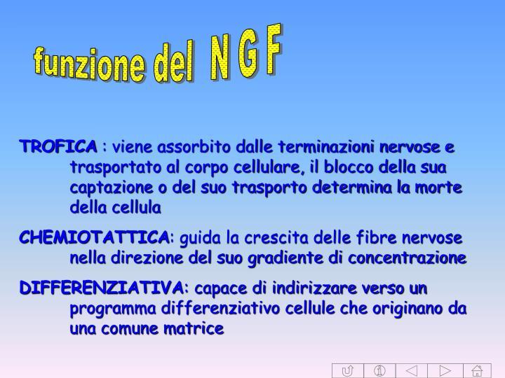 funzione del  N G F