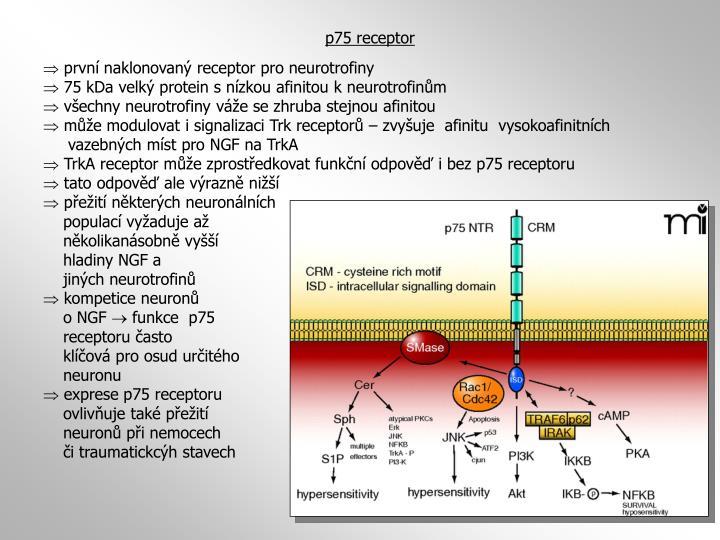 p75 receptor