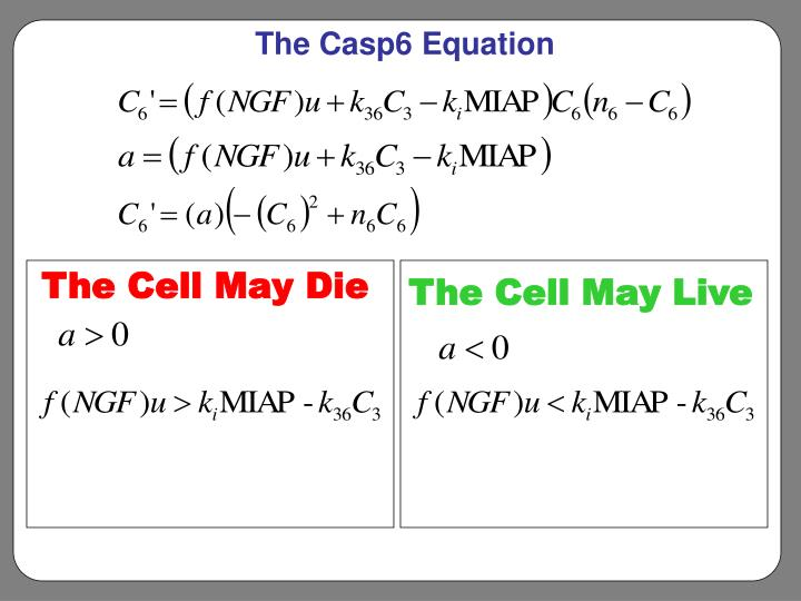 The Casp6 Equation