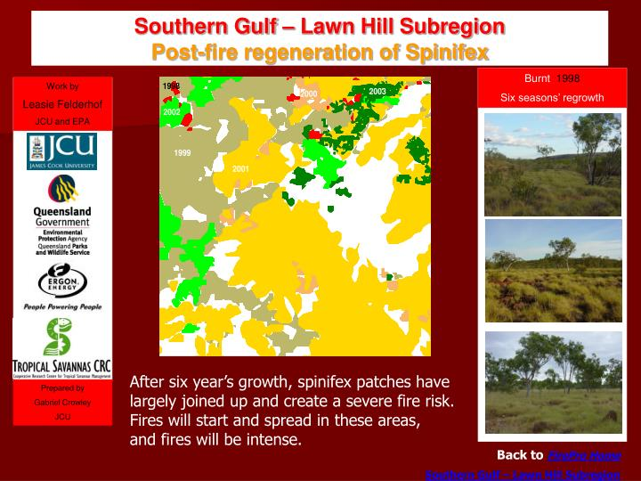 southern gulf lawn hill subregion post fire regeneration of spinifex n.