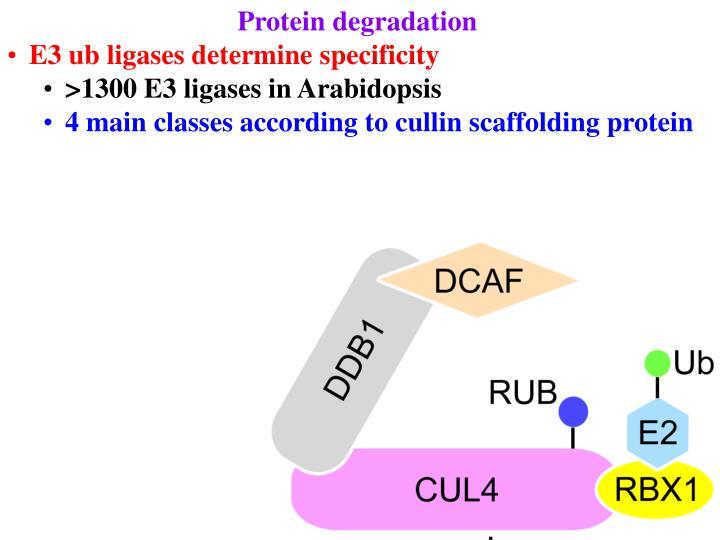 Protein degradation