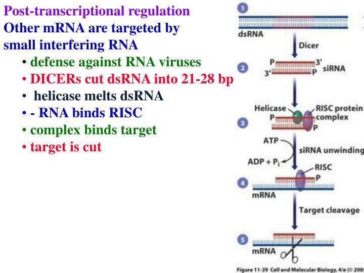 Post-transcriptional regulation