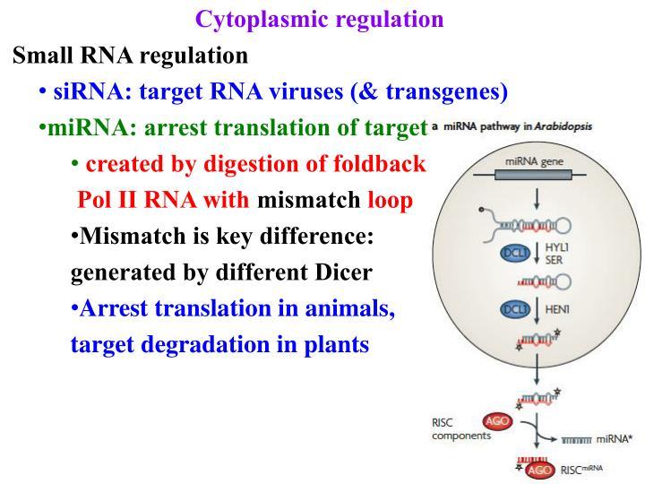 Cytoplasmic regulation