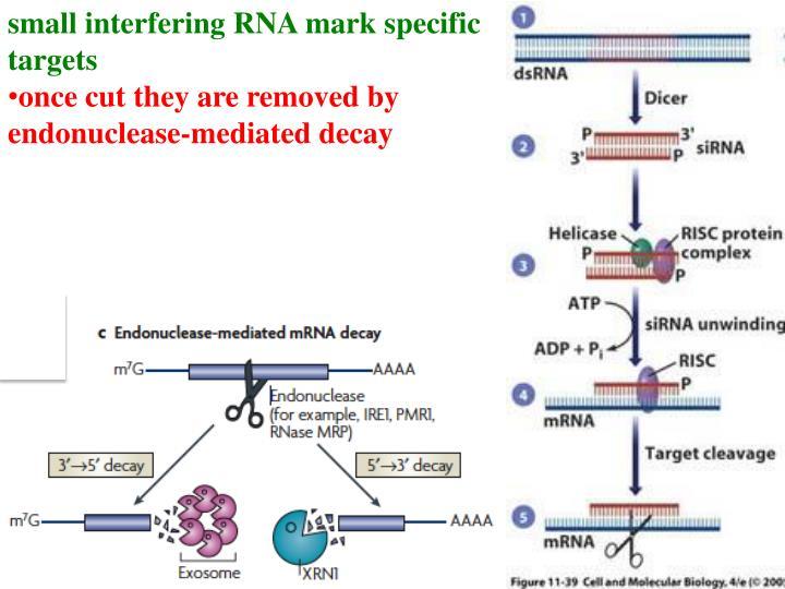 small interfering RNA mark specific