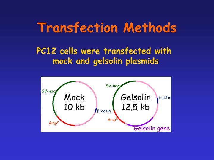 Transfection Methods