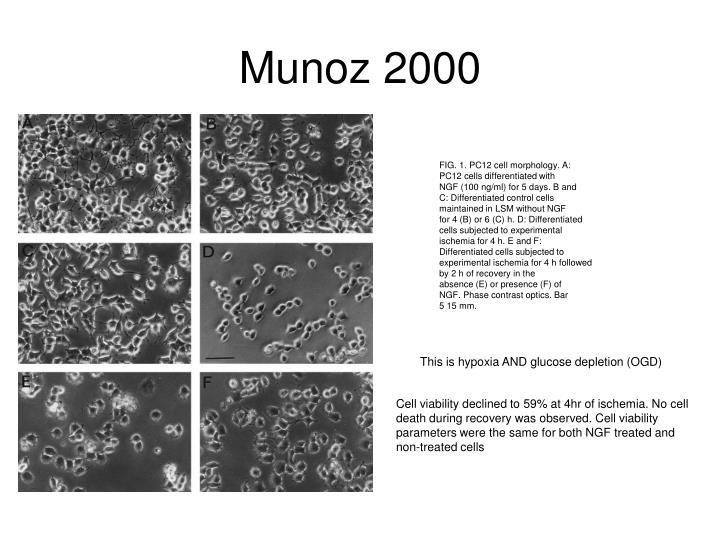 Munoz 2000