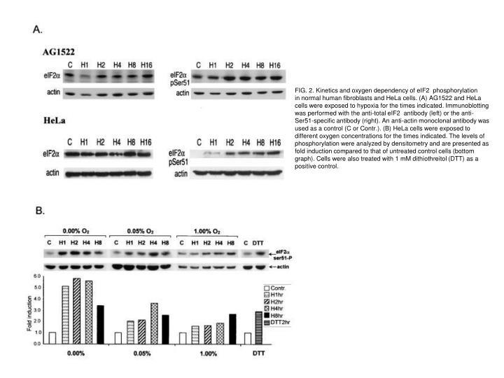 FIG. 2. Kinetics and oxygen dependency of eIF2  phosphorylation