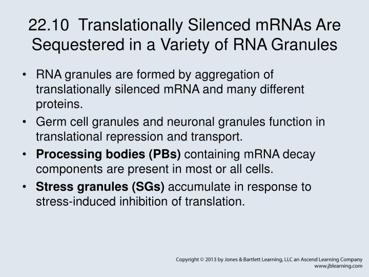22.10  Translationally Silenced mRNAs Are Sequestered in a Variety of RNA Granules