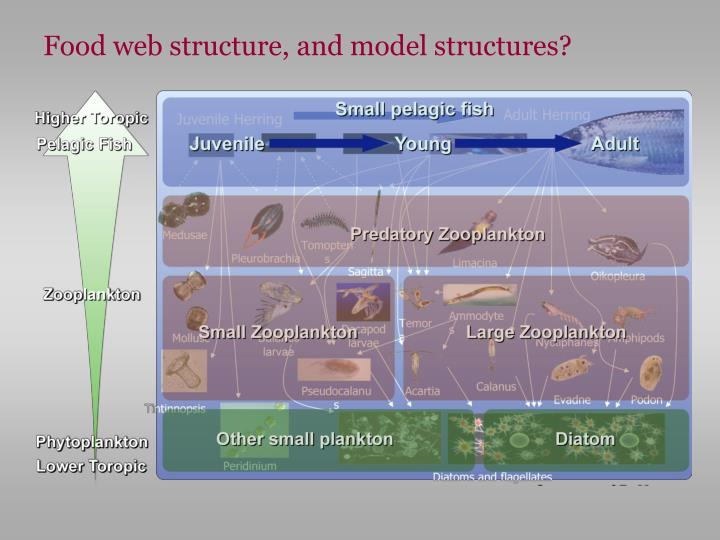 Food web structure, and model structures?