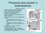 processos que causam a fosforesc ncia